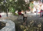 Day 4, Cleanliness Drives at MGIRI (south campus)